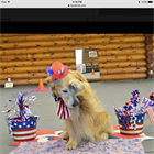 10 Tips to keep your pet safe on the 4th of July